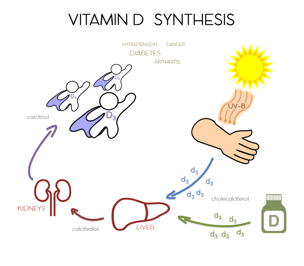 6f412f3417fb It's like we're some kind of super-human plant or something! Through a type  of human-photosynthesis, our body uses the sun's energy to create health!